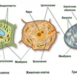 Чем грибы отличаются от животных и растений