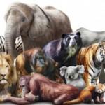 Чем животные отличаются от млекопитающих