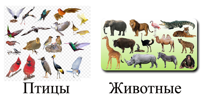 Птицы и животные