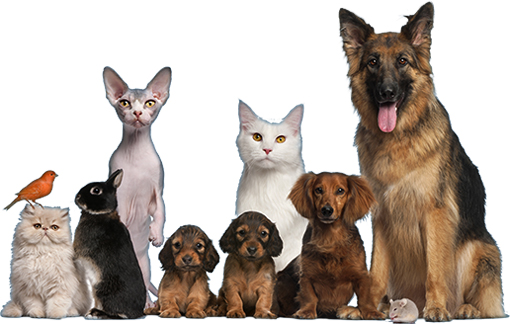 Животные вместе