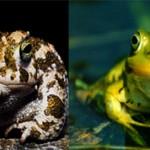 Чем отличается жаба от лягушки — основные отличия