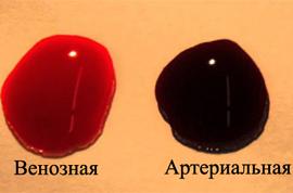 Артериальная и венозная кровь цвет