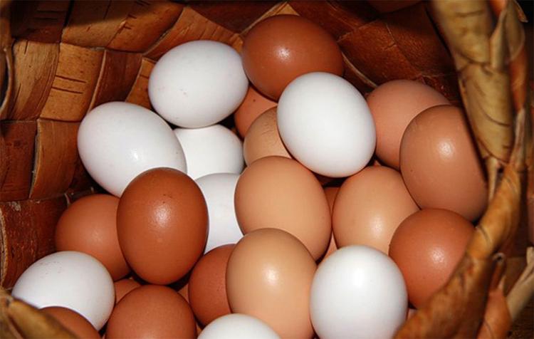 Красные и коричневые яйца