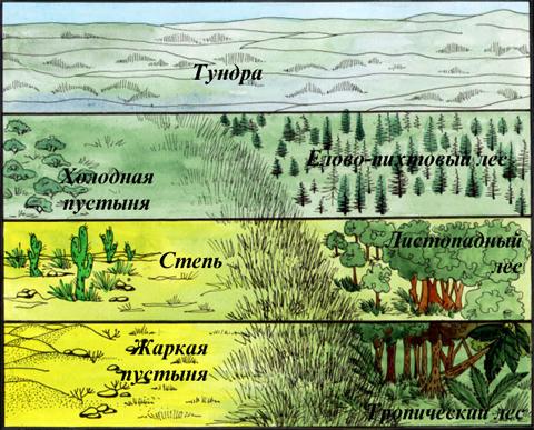 Природная экосистема