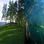 Чем отличается наземно-воздушная среда от водной