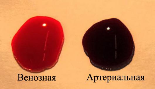 Венозная и артериальная кровь