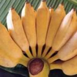 Маленькие и большие бананы: польза и отличия