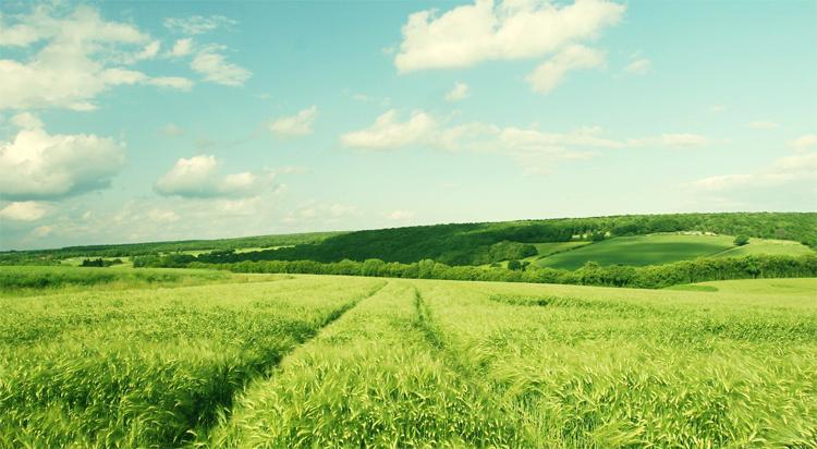 Чем поле отличается от луга и в чем сходства В чем разница На сегодняшний день чтобы получить большее количество урожая поля мелиорируют вносят на них удобрения и используют севооборот