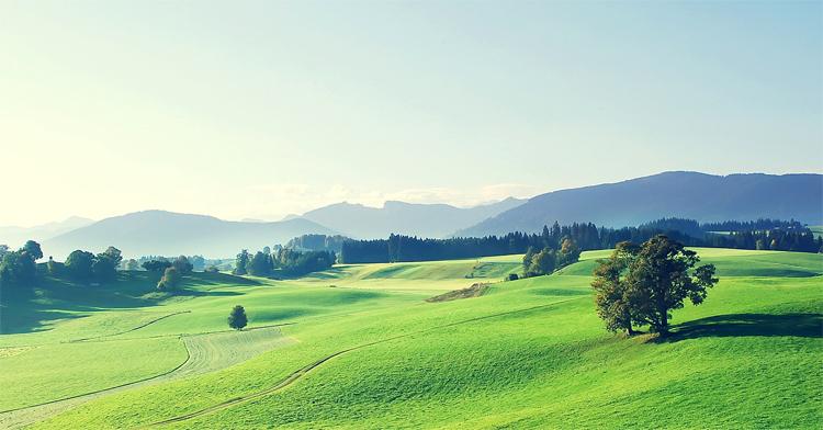 Чем поле отличается от луга и в чем сходства В чем разница Луг