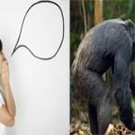 Чем устная речь человека отличается от языка животных?