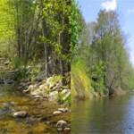 Чем отличается ручей от реки — основные отличия