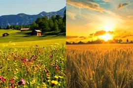 Чем поле отличается от луга и в чем сходства В чем разница Некоторые люди не видят разницы между понятиями луг и поле ведь они внешне похожи однообразный ковёр покрытый различными травами и злаками
