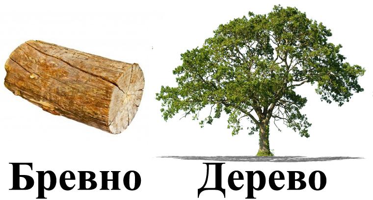 Основные отличия дерева от бревна