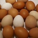 Домашние и фабричные яйца: чем отличаются и что лучше