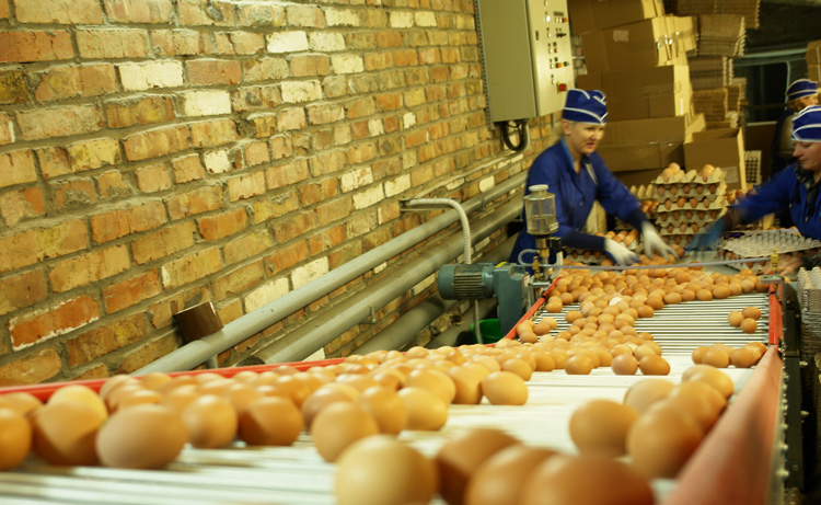 Фабричные яйца