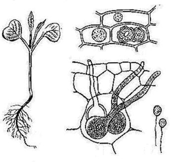 грибки паразиты человека