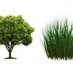 Чем отличается дерево от травы: описание и отличия