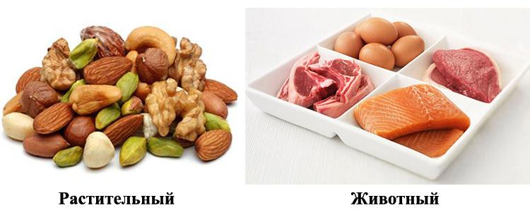Растительный и животный белок