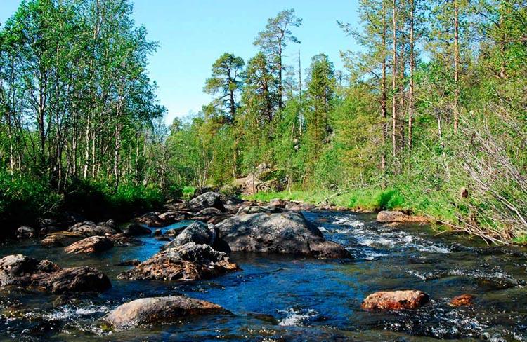Экосистема - ручей
