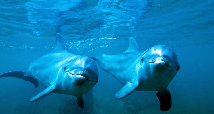 Красивые дельфины