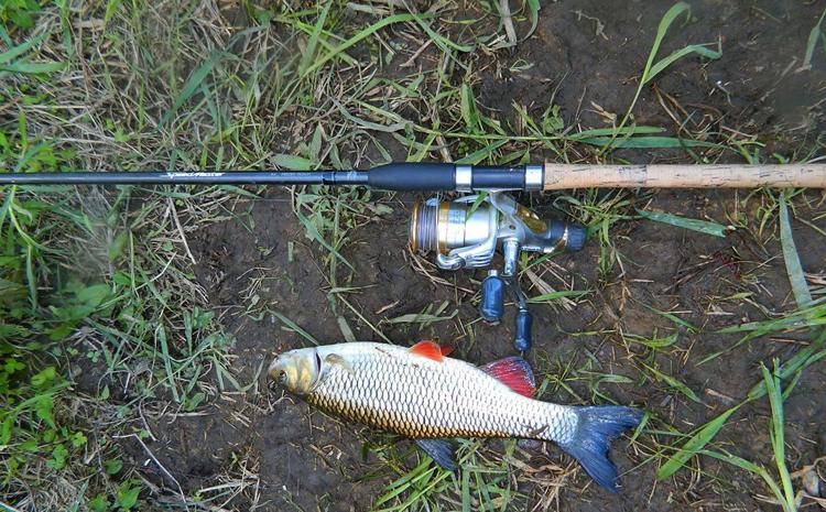 Фидерное удилище и рыба