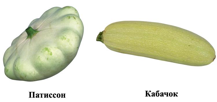 Патиссон и кабачок