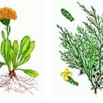 Чем отличаются голосеменные отряды от покрытосеменных?