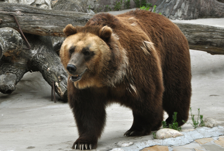 Секс рассказы бурый медведь фото 796-245