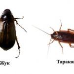 Чем отличается таракан от жука?