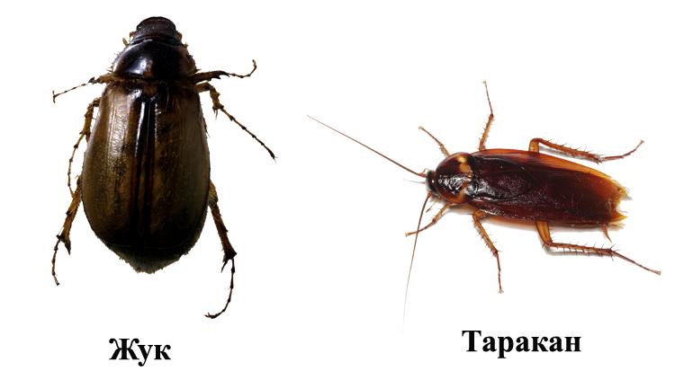 Жук и таракан