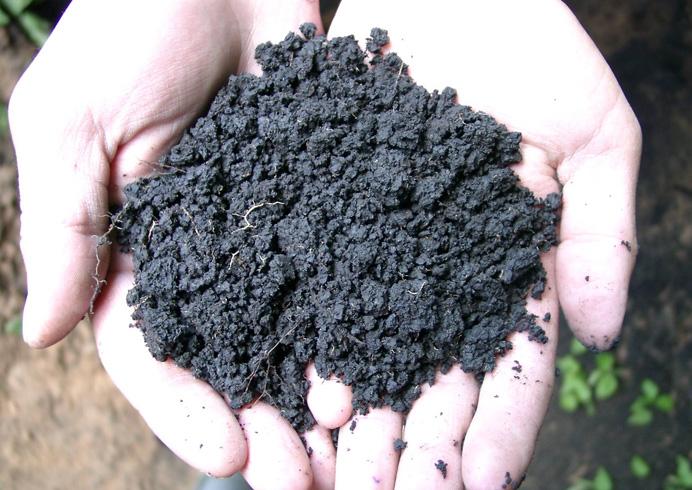 Почва в руках