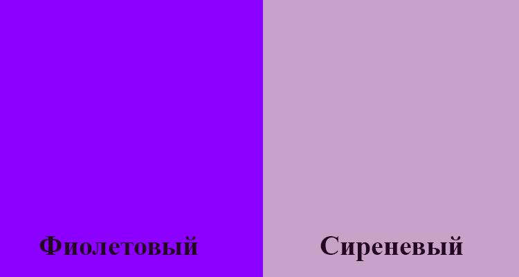 Фиолетовый и сиреневый цвета