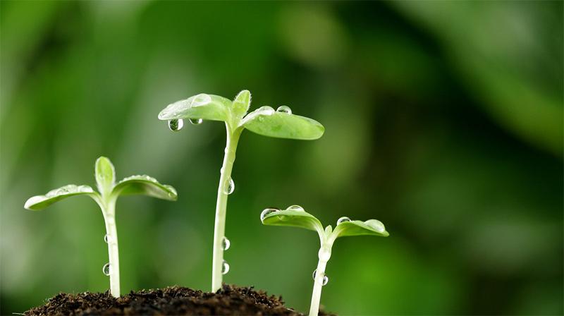Маленькое растение