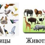 Чем птицы отличаются от животных