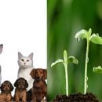 Чем животные отличаются от растений