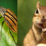 Чем отличается насекомое от животного