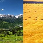 Чем природная экосистема отличается от агроэкосистемы
