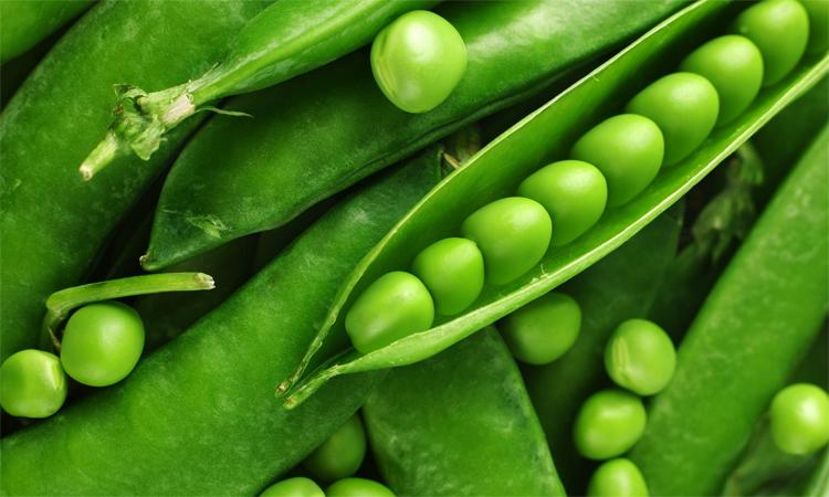 Зеленый горох