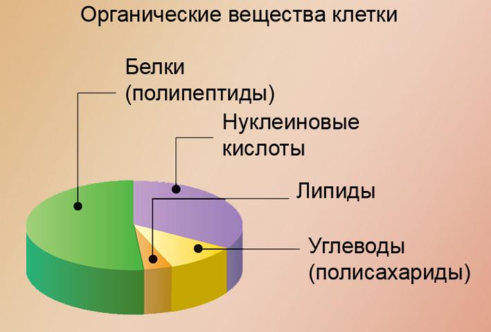 Органические вещества клетки