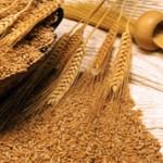 Чем отличаются мягкие и твердые сорта пшеницы?