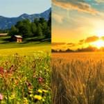 Чем поле отличается от луга?(и в чем сходства)