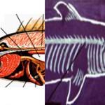 Чем костные рыбы отличаются от хрящевых — различия и строение