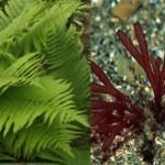 Чем папоротники отличаются от водорослей