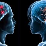 Чем мужской мозг отличается от женского?