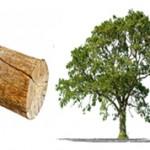 Чем отличается дерево от бревна — основные отличия