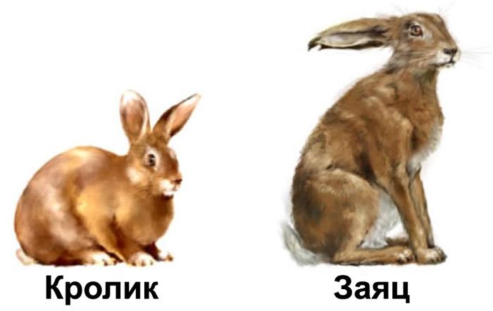 Кролик и заяц