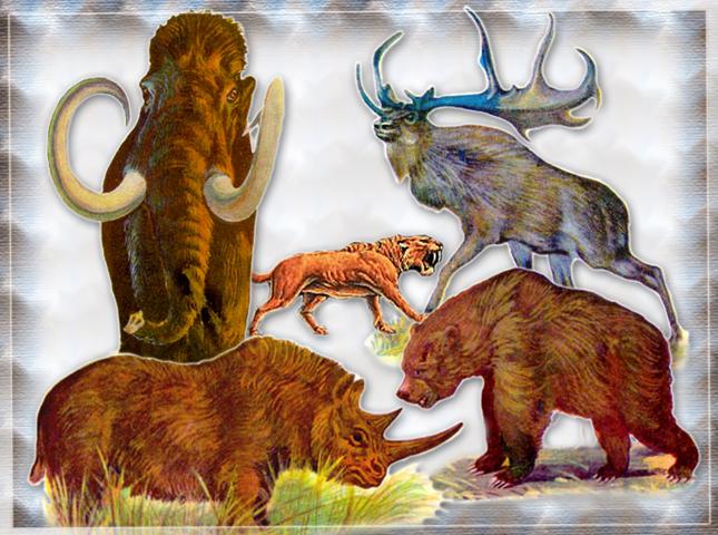 Высшие млекопитающие