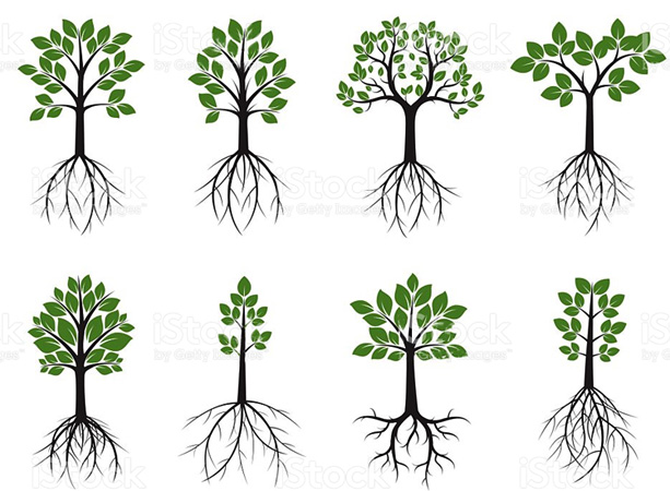 Деревеья и корни