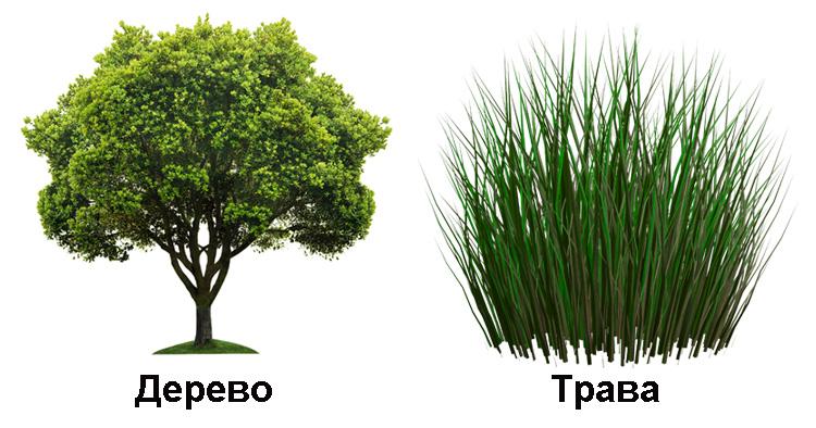 Дерево и трава