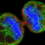 Чем многоклеточные отличаются от одноклеточных — основные отличия